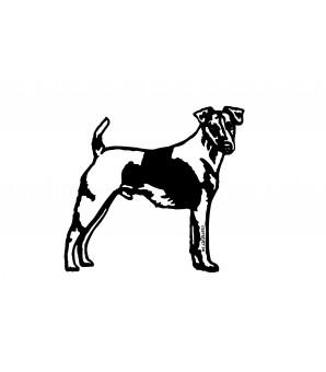 Fox terrier poil lisse