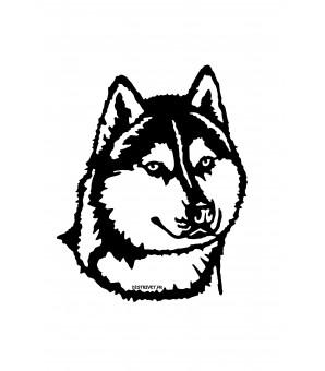 Sibérian Husky